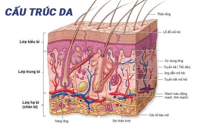 Cấu trúc da mỗi người